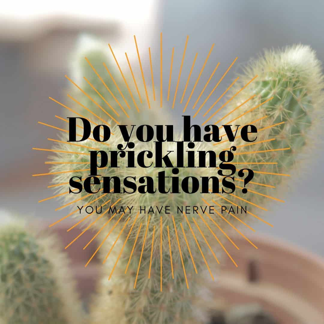 cactus with text overlay